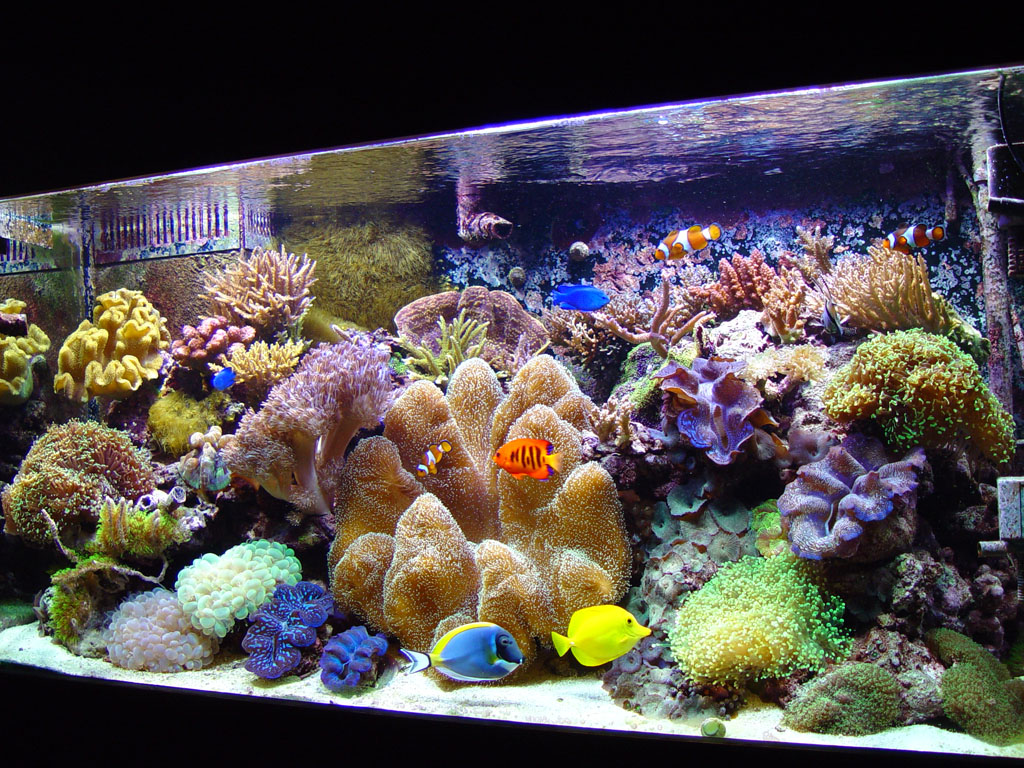 Clean Tanks, The Key to a Healthy Aquarium