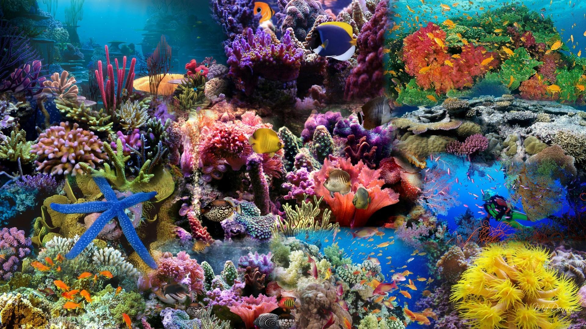 Aquariums, The Key to Reducing Stress
