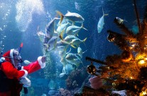 Five Guidelines To Giving Fish as a Christmas Gift