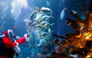 Diver Hoeppner dressed as Santa Claus feeds fishes during marketing event at SeaLife aquarium in Timmendorf near Luebeck