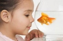 Educating Kids Through Responsible Fish Care