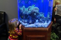 The Benefits of Dr.'s Office Aquariums