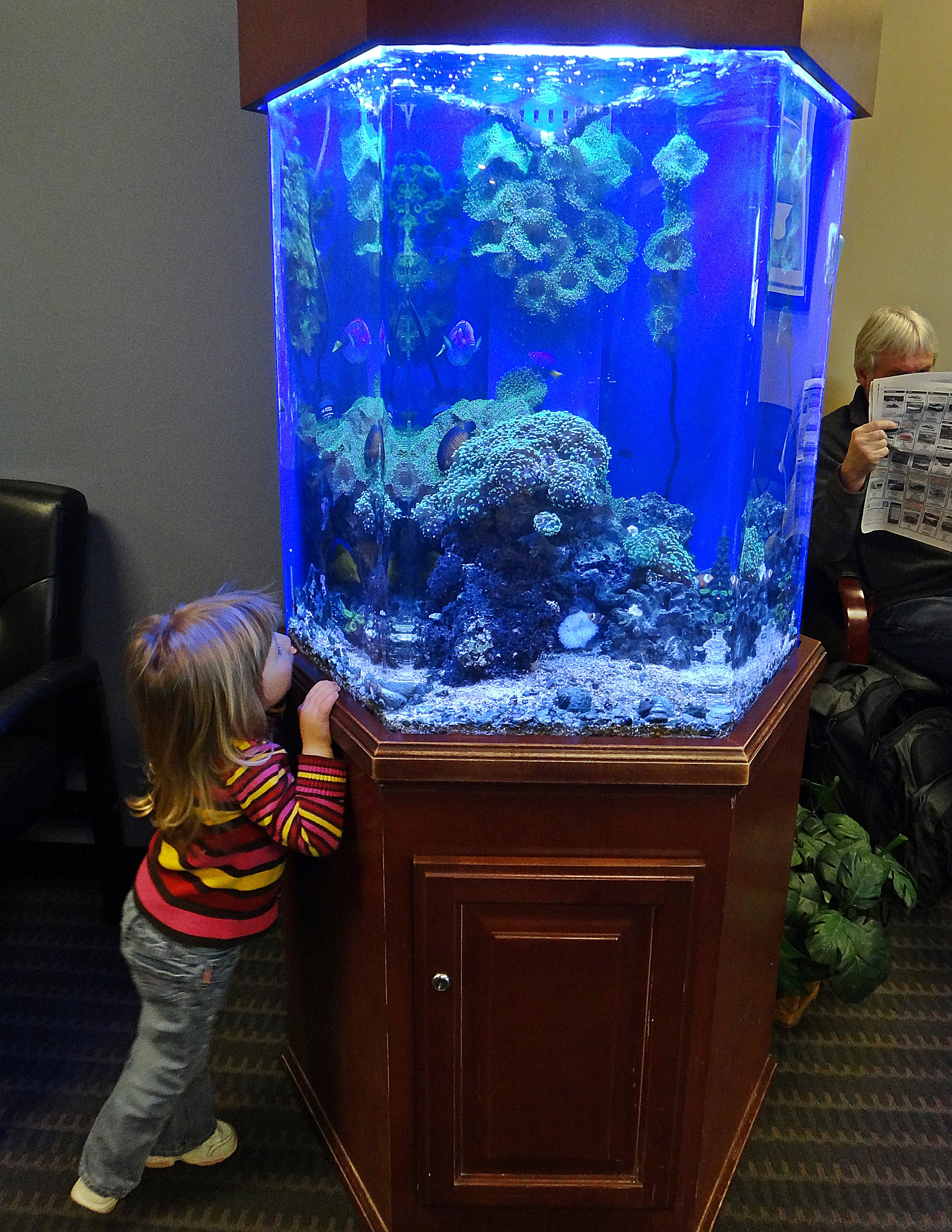 The Benefits of Drs Office Aquariums PCH Tanks