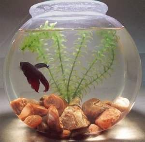Orange county aquarium maintenance fish tank cleaning by for Easiest fish to care for
