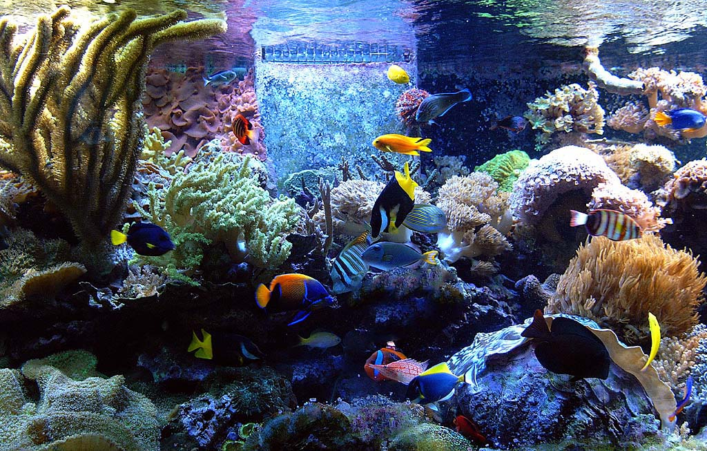 We Service The Following Cities And Surrounding Communities Huntington Beach Aquarium Services Newport