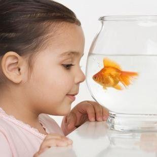 Educating Kids Through Responsible Fish Care Pch Tanks